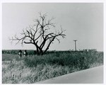 "F08_E06_02 Big Mabel (Carole Lamond) and Gordon Parks, Jr. walk past ""The Learning Tree"" tree while on location in Bourbon and Linn counties, Kansas by Unknown"