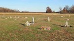 Distant view of several markers by Dan Knaup